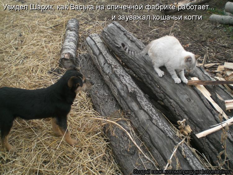 Котоматрица: Увидел Шарик, как Васька на спичечной фабрике работает... ... и зауважал кошачьи когти