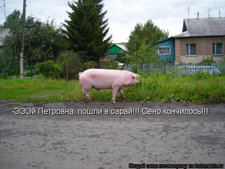Котоматрица: -ЭЭЭй Петровна, пошли в сарай!!! Сено кончилось!!!