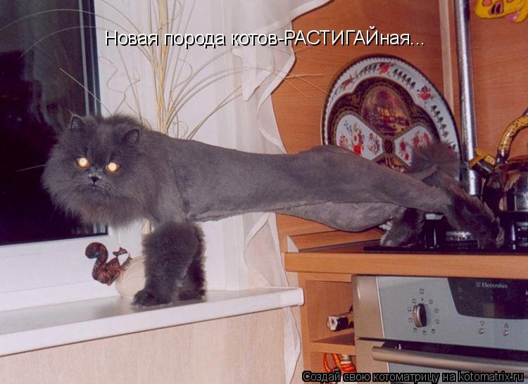 Котоматрица: Новая порода котов-РАСТИГАЙная...