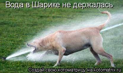 Котоматрица: Вода в Шарике не держалась