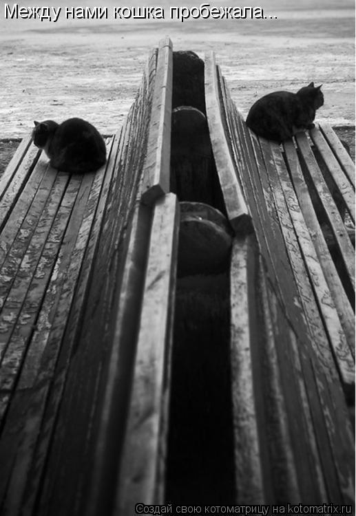 Котоматрица: Между нами кошка пробежала...