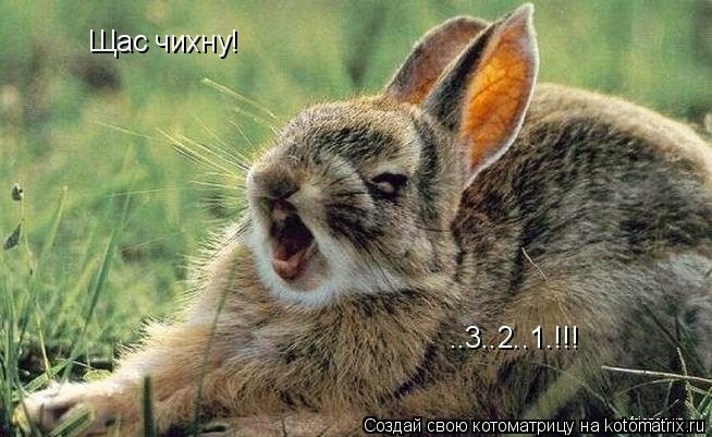 Котоматрица: Щас чихну! ..3..2..1.!!!