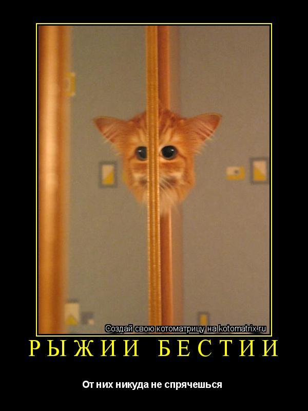 Котоматрица: рыжии бестии От них никуда не спрячешься