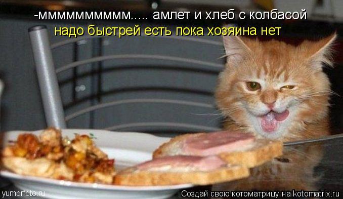 Котоматрица: -мммммммммм..... амлет и хлеб с колбасой  надо быстрей есть пока хозяина нет