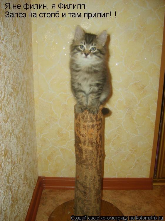 Котоматрица: Я не филин, я Филипп.  Залез на столб и там прилип!!! Залез на столб и там прилип!!!