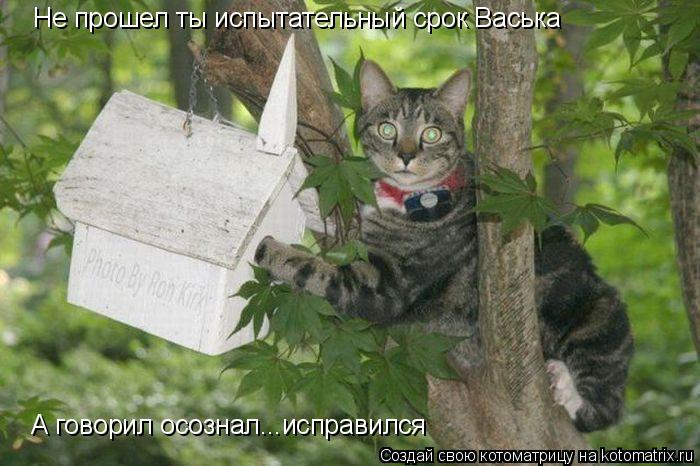 Котоматрица: Не прошел ты испытательный срок Васька А говорил осознал...исправился