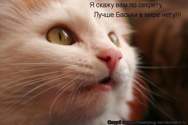 Котоматрица: Я скажу вам по секрету, Лучше Баськи в мире нету!!!