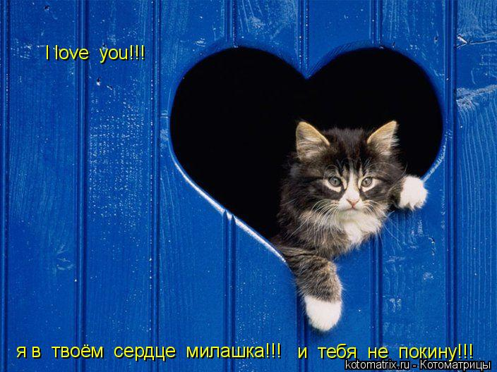 Котоматрица: I love  you!!! я в  твоём  сердце  милашка!!! и  тебя  не  покину!!!
