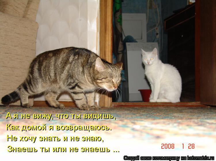 Котоматрица: А я не вижу, что ты видишь, Как домой я возвращаюсь. Не хочу знать и не знаю, Знаешь ты или не знаешь ...