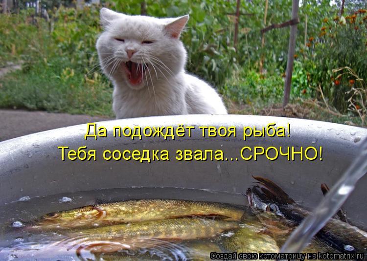 Котоматрица: Да подождёт твоя рыба! Тебя соседка звала...СРОЧНО!