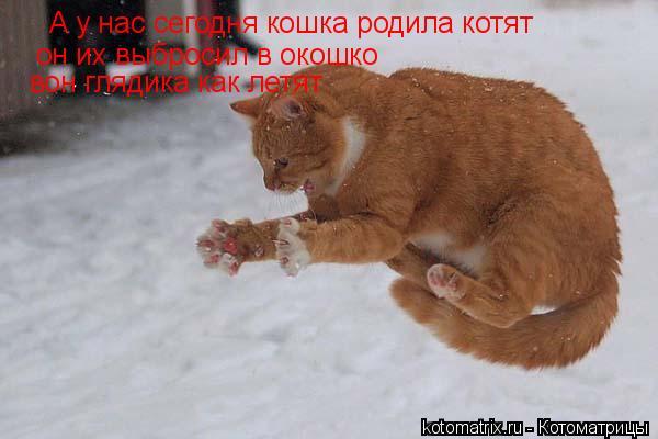 Котоматрица: А у нас сегодня кошка родила котят он их выбросил в окошко вон глядика как летят