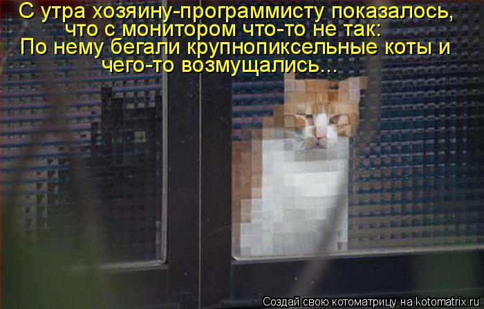 Котоматрица - С утра хозяину-программисту показалось,  что с монитором что-то не так
