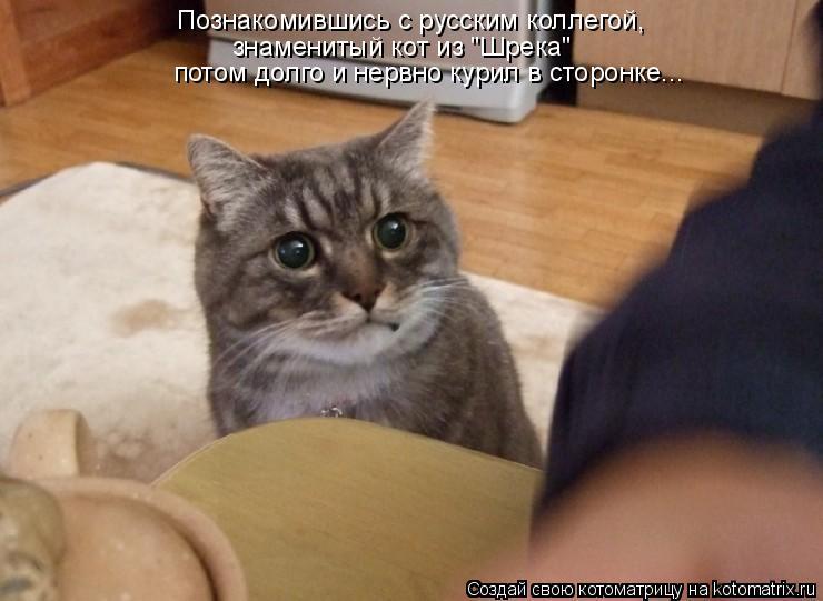 """Котоматрица: потом долго и нервно курил в сторонке... Познакомившись с русским коллегой,   знаменитый кот из """"Шрека"""""""