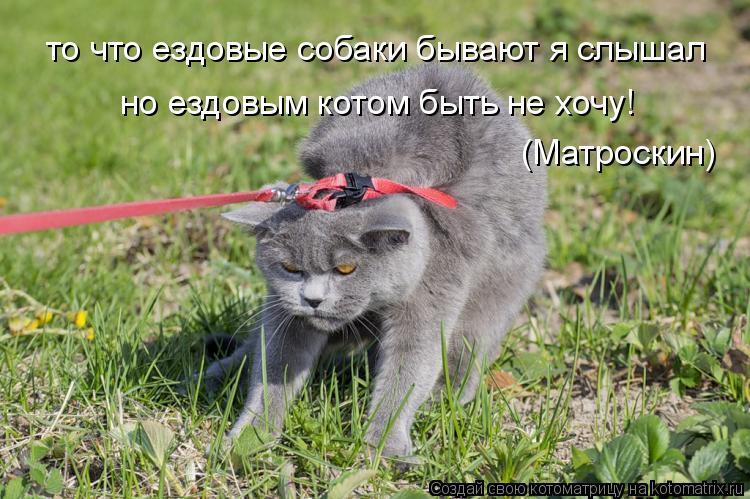 Котоматрица: то что ездовые собаки бывают я слышал но ездовым котом быть не хочу! (Матроскин)