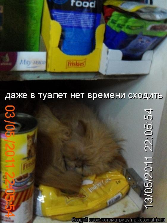 Котоматрица: даже в туалет нет времени сходить 13/05/2011 22:05:54