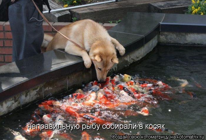 Котоматрица: неправильную рыбу собирали в косяк