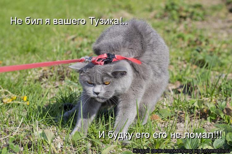 Котоматрица: Не бил я вашего Тузика!.. И будку его его не ломал!!!
