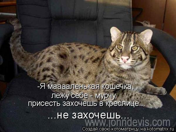 Котоматрица: -Я мааааленькая кошечка,  лежу себе - мурчу,  присесть захочешь в креслице... ...не захочешь...