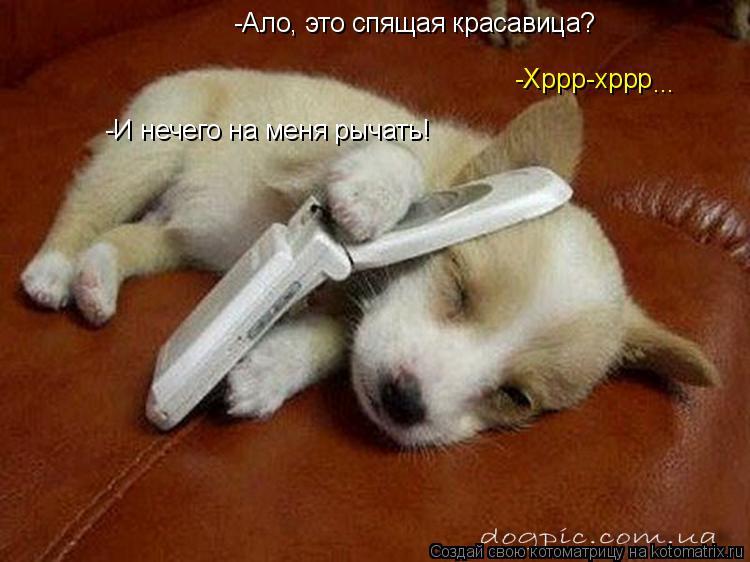 Котоматрица: -Ало, это спящая красавица? -Хррр-хррр -И нечего на меня рычать! ...