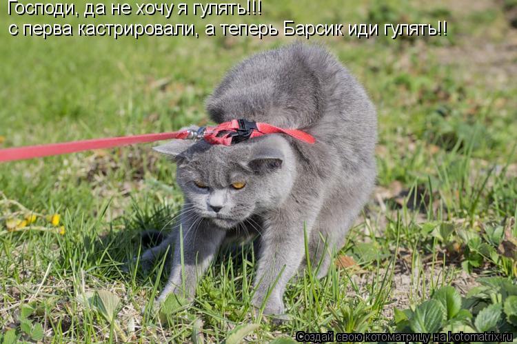 Котоматрица: Господи, да не хочу я гулять!!!  с перва кастрировали, а теперь Барсик иди гулять!!