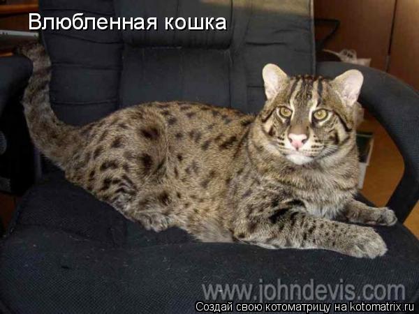 Котоматрица: Влюбленная кошка