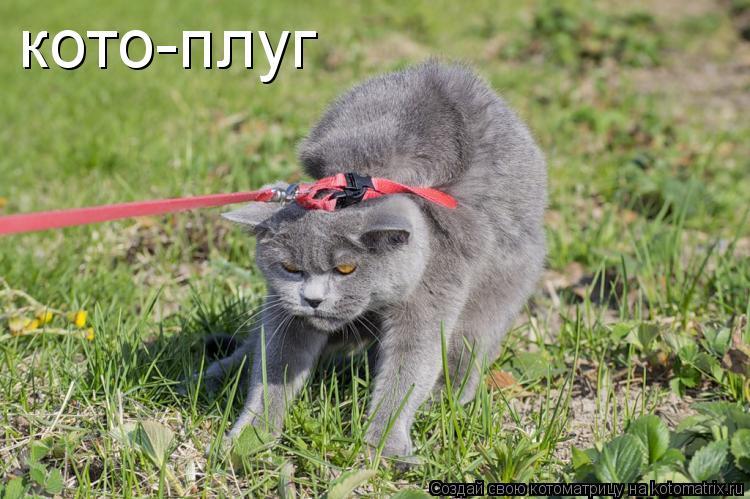 Котоматрица: кото-плуг