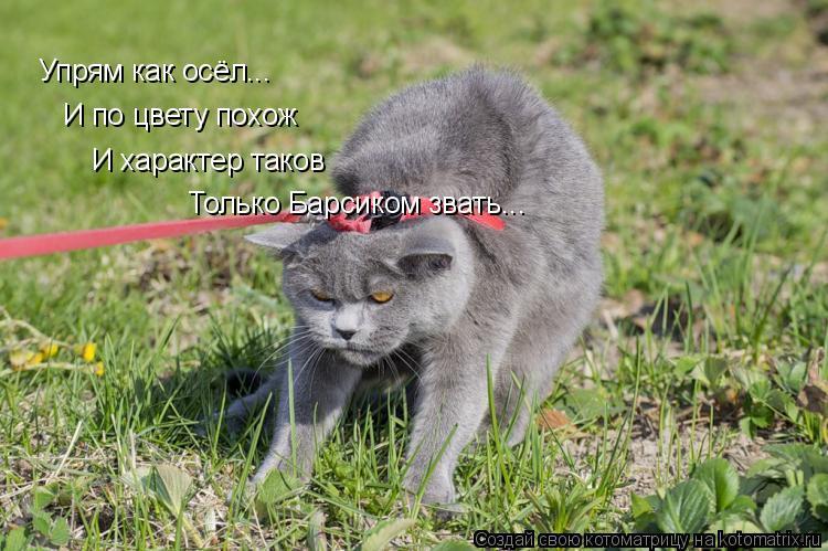 Котоматрица: Упрям как осёл...  И по цвету похож И характер таков Только Барсиком звать...
