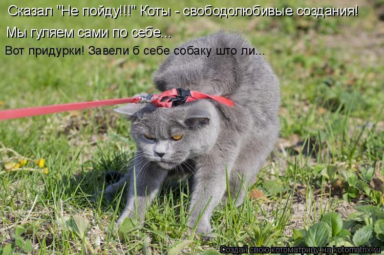 """Котоматрица: Сказал """"Не пойду!!!"""" Коты - свободолюбивые создания! Мы гуляем сами по себе... Вот придурки! Завели б себе собаку што ли..."""
