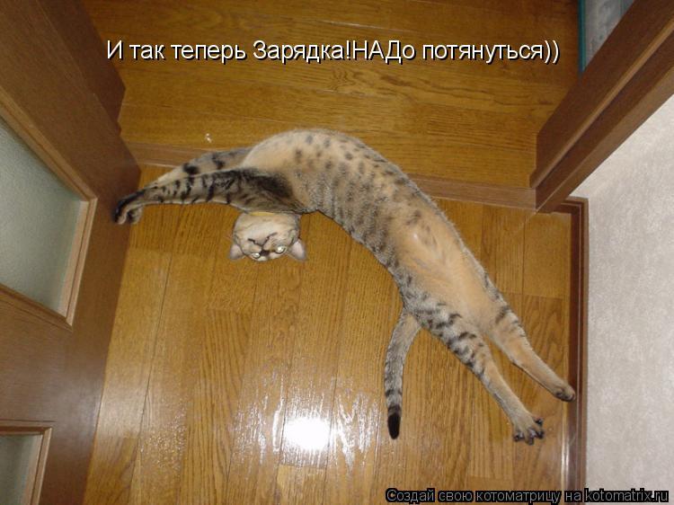 Котоматрица: И так теперь Зарядка!НАДо потянуться))