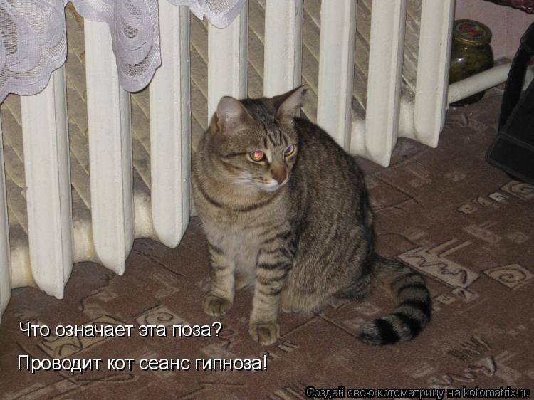 Котоматрица: Что означает эта поза? Проводит кот сеанс гипноза!
