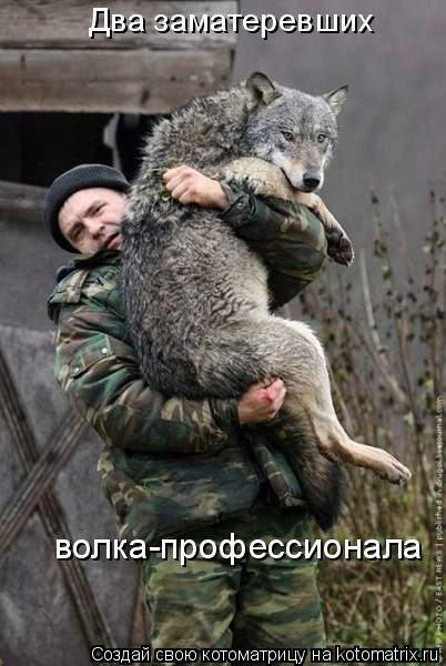 Котоматрица: Два заматеревших  волка-профессионала