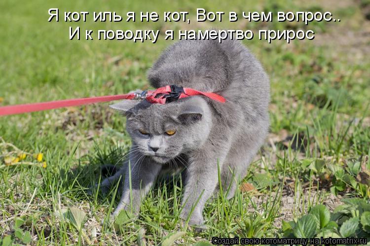 Котоматрица: Я кот иль я не кот, Вот в чем вопрос.. И к поводку я намертво прирос