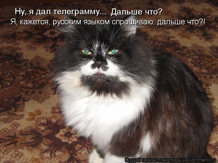 Котоматрица: Ну, я дал телеграмму... Дальше что? Я, кажется, русским языком спрашиваю: дальше что?!