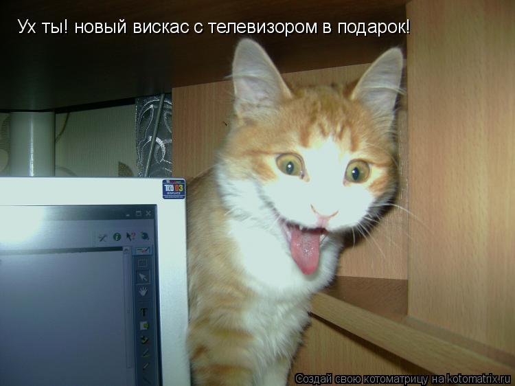 Котоматрица: Ух ты! новый вискас с телевизором в подарок! Да еще и