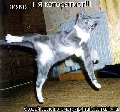 Котоматрица: кияяя !!! я которатист!!!
