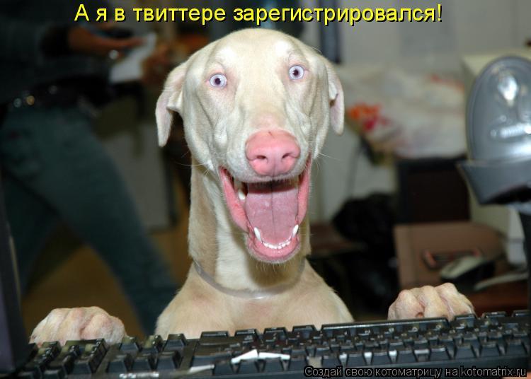 Котоматрица: А я в твиттере зарегистрировался!