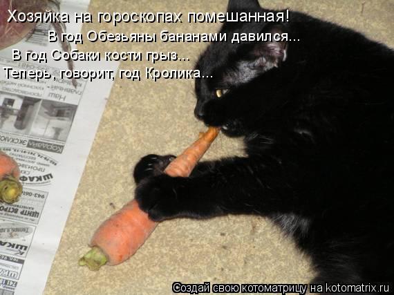 Котоматрица: Хозяйка на гороскопах помешанная! В год Обезьяны бананами давился... В год Собаки кости грыз... Теперь, говорит, год Кролика...