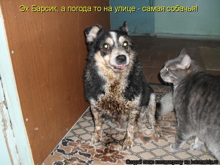 Котоматрица: Эх Барсик, а погода то на улице - самая собачья!