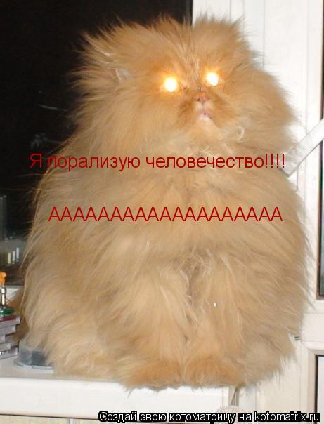 Котоматрица: Я порализую человечество!!!! ААААААААААААААААААА