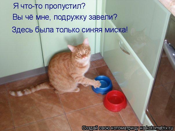 Котоматрица: Я что-то пропустил?  Вы чё мне, подружку завели?  Здесь была только синяя миска!