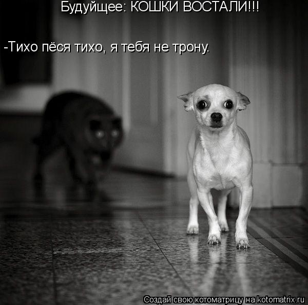 Котоматрица: Будуйщее: КОШКИ ВОСТАЛИ!!! -Тихо пёся тихо, я тебя не трону.