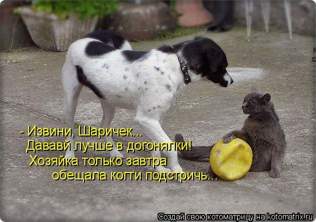 Котоматрица: - Извини, Шаричек...  Дававй лучше в догонялки!  Хозяйка только завтра    обещала когти подстричь...