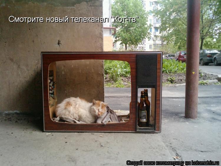 """Котоматрица: Смотрите новый телеканал """"Кот-тв"""""""