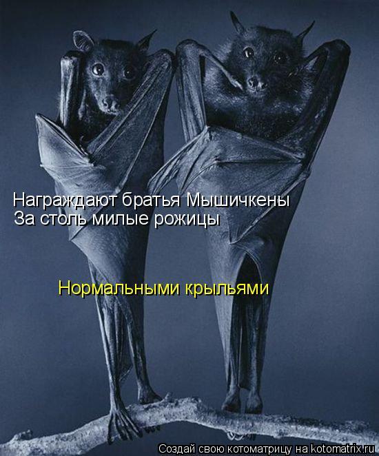 Котоматрица: Награждают братья Мышичкены За столь милые рожицы Нормальными крыльями