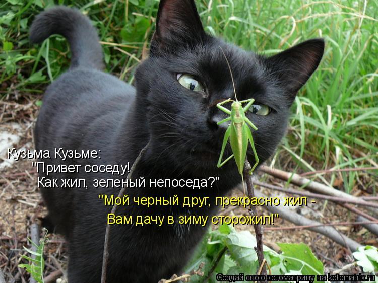 """Котоматрица: Кузьма Кузьме: """"Привет соседу! Как жил, зеленый непоседа?"""" """"Мой черный друг, прекрасно жил -  Вам дачу в зиму сторожил!"""""""