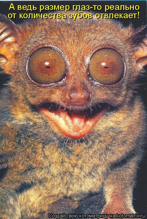 Котоматрица: А ведь размер глаз-то реально от количества зубов отвлекает!