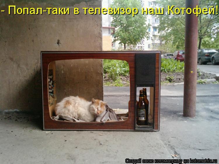 Котоматрица: - Попал-таки в телевизор наш Котофей!