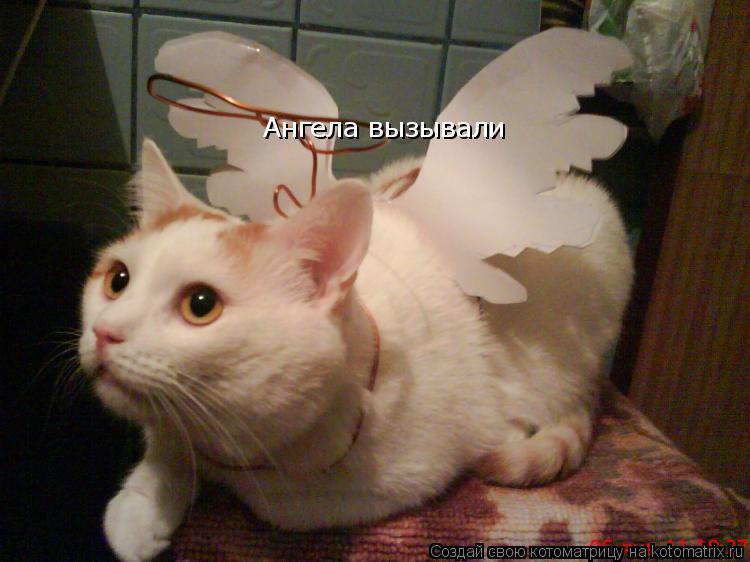 Котоматрица: Ангела вызывали  Ангела вызывали