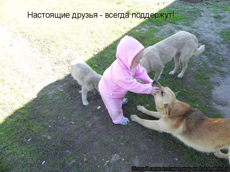 Котоматрица: Настоящие друзья - всегда поддержут!
