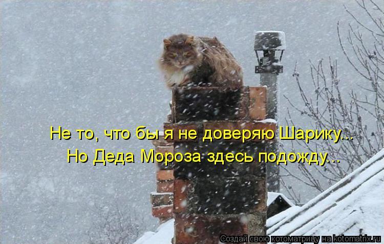 Котоматрица - Не то, что бы я не доверяю Шарику... Но Деда Мороза здесь подожду...